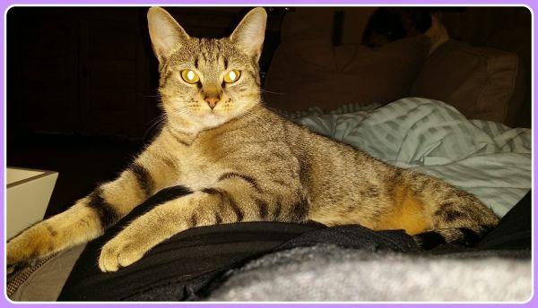 katten en oorontsteking